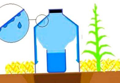 Ahorra agua este verano con el riego solar por goteo.