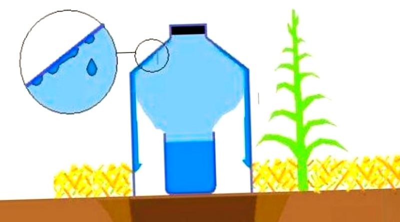 Ahorra agua este verano con el riego solar por goteo