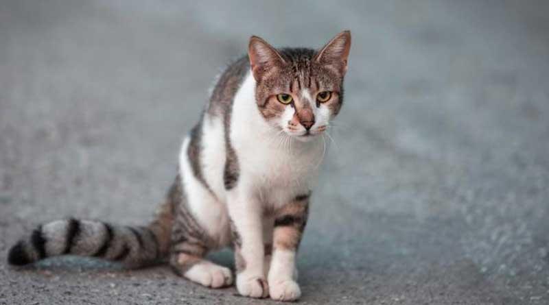 El consejo increible para encontrar un gato perdido