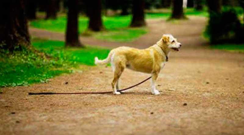 El increible consejo para encontrar un perro perdido