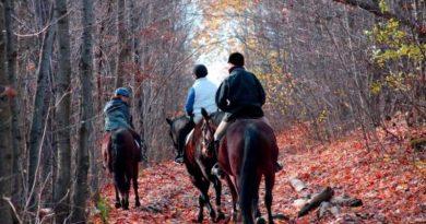como montar a caballo correctamente