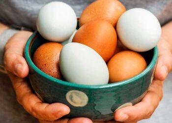 Cómo conocer el estado de un huevo